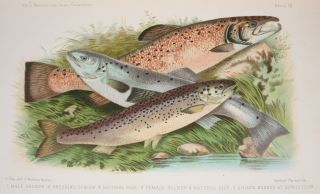 BRITISH AND IRISH SALMONIDAE.